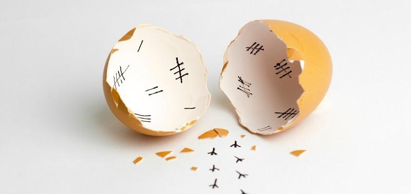 MB_hatched egg_news